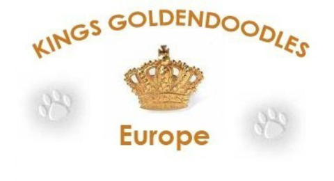 goldendoodle_kings_new